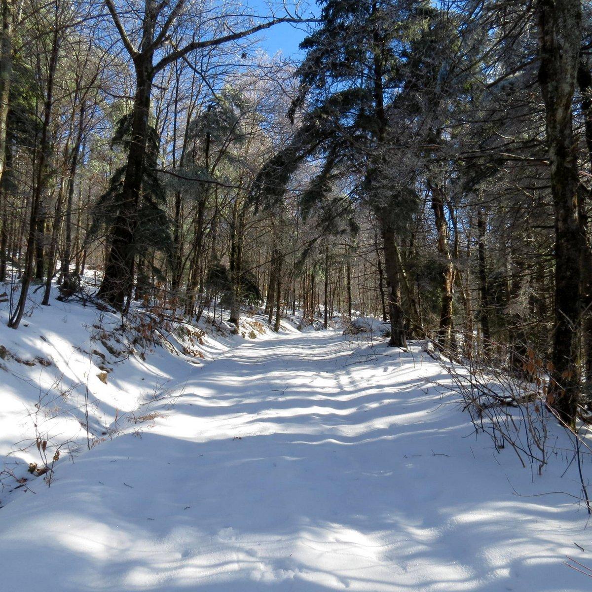 2. Trail