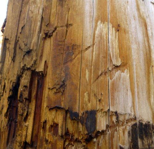 3. Bear Claw marks