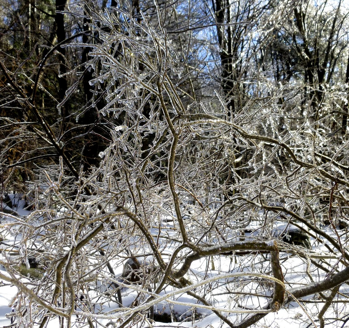 3. Icy Bush