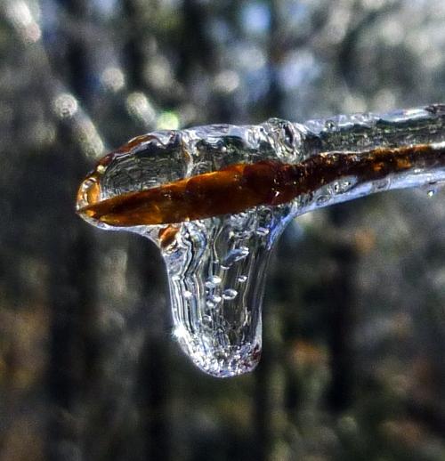 5. Icy Bud