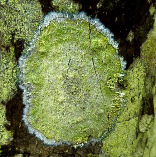 8. Unknown Lichen or Fungus