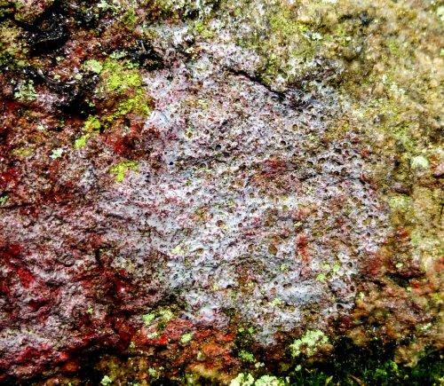 9. Blue Purple Lichen