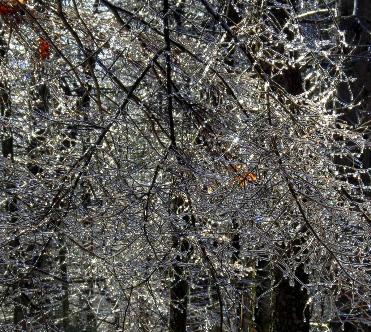 9. Icy Branches