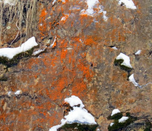 12. Algae on Rock Face