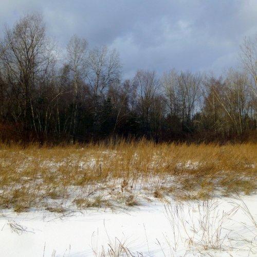 13. Meadow