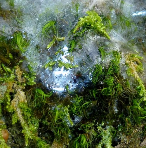 16. Ice Covered Moss