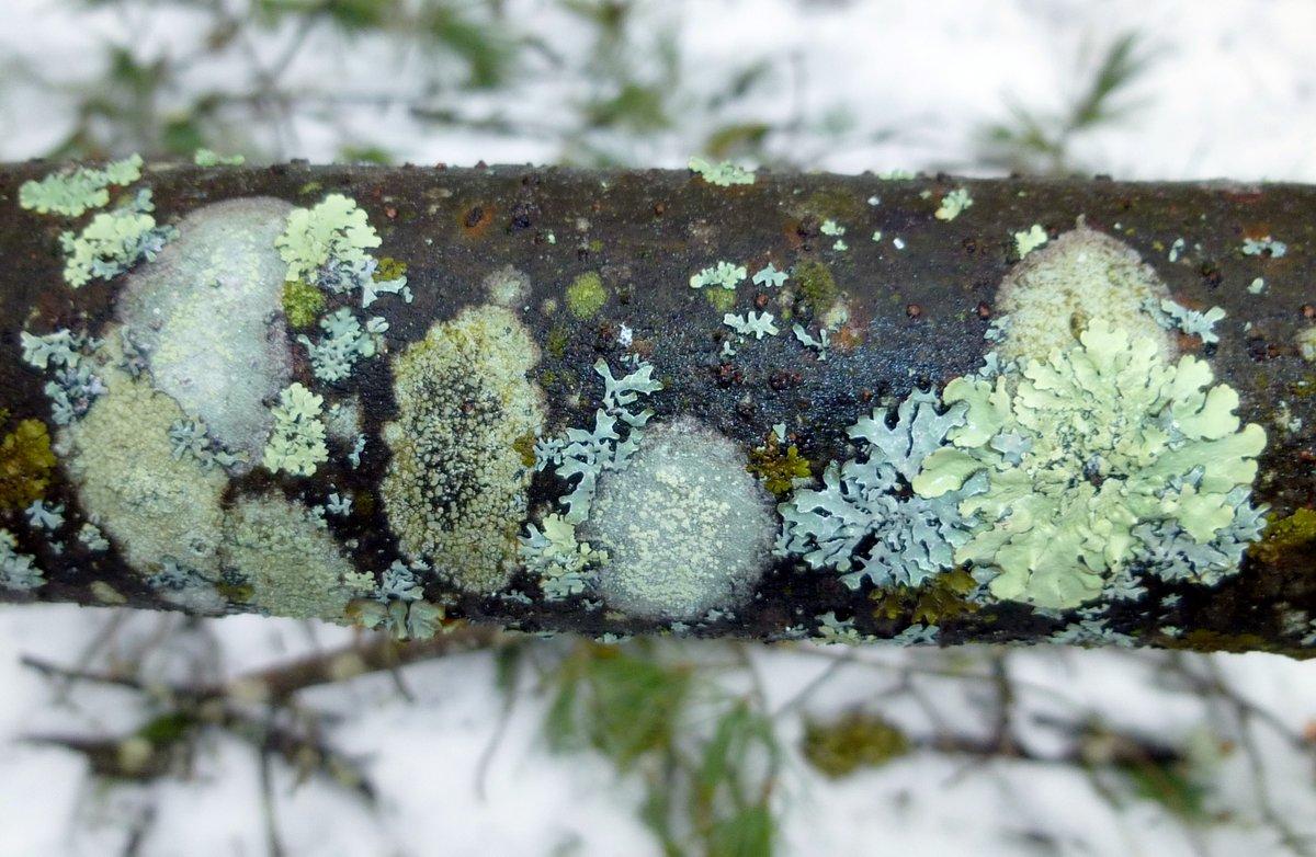 9. Lichen Garden