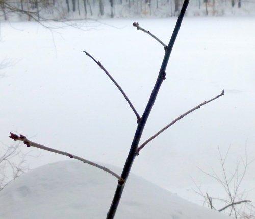 10. Oak Branch