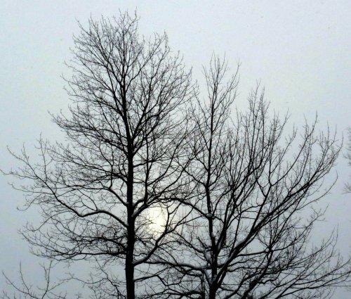 11. Dim Sun