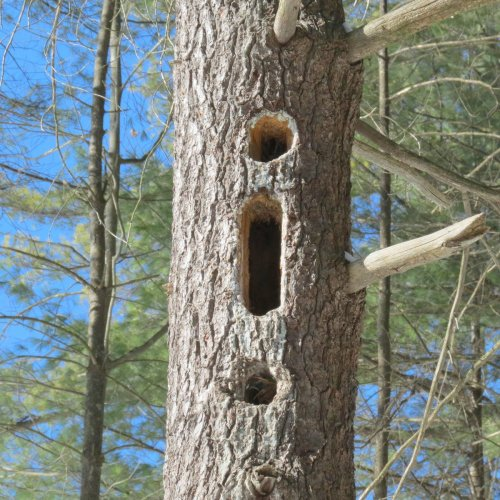 11. Woodpecker Holes