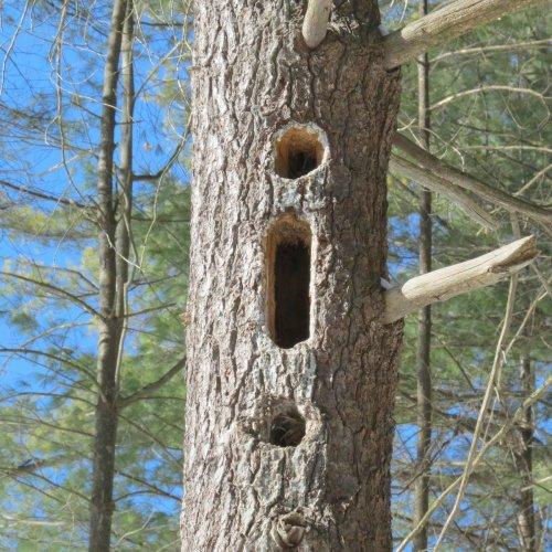 11. Woodpecker Holes