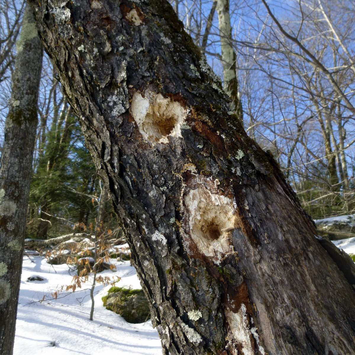 12. Woodpecker Holes