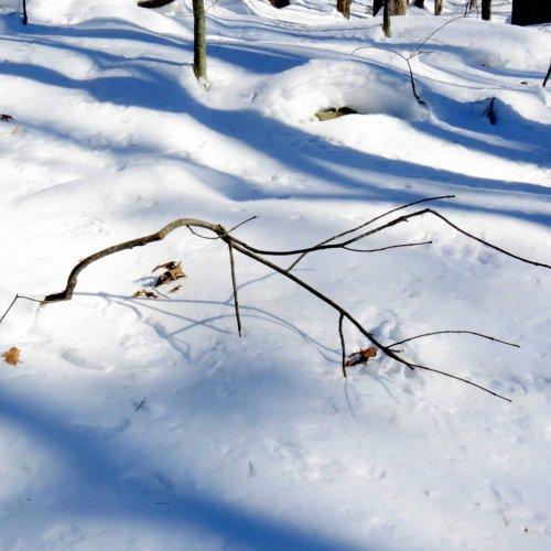 6. Fallen Branch