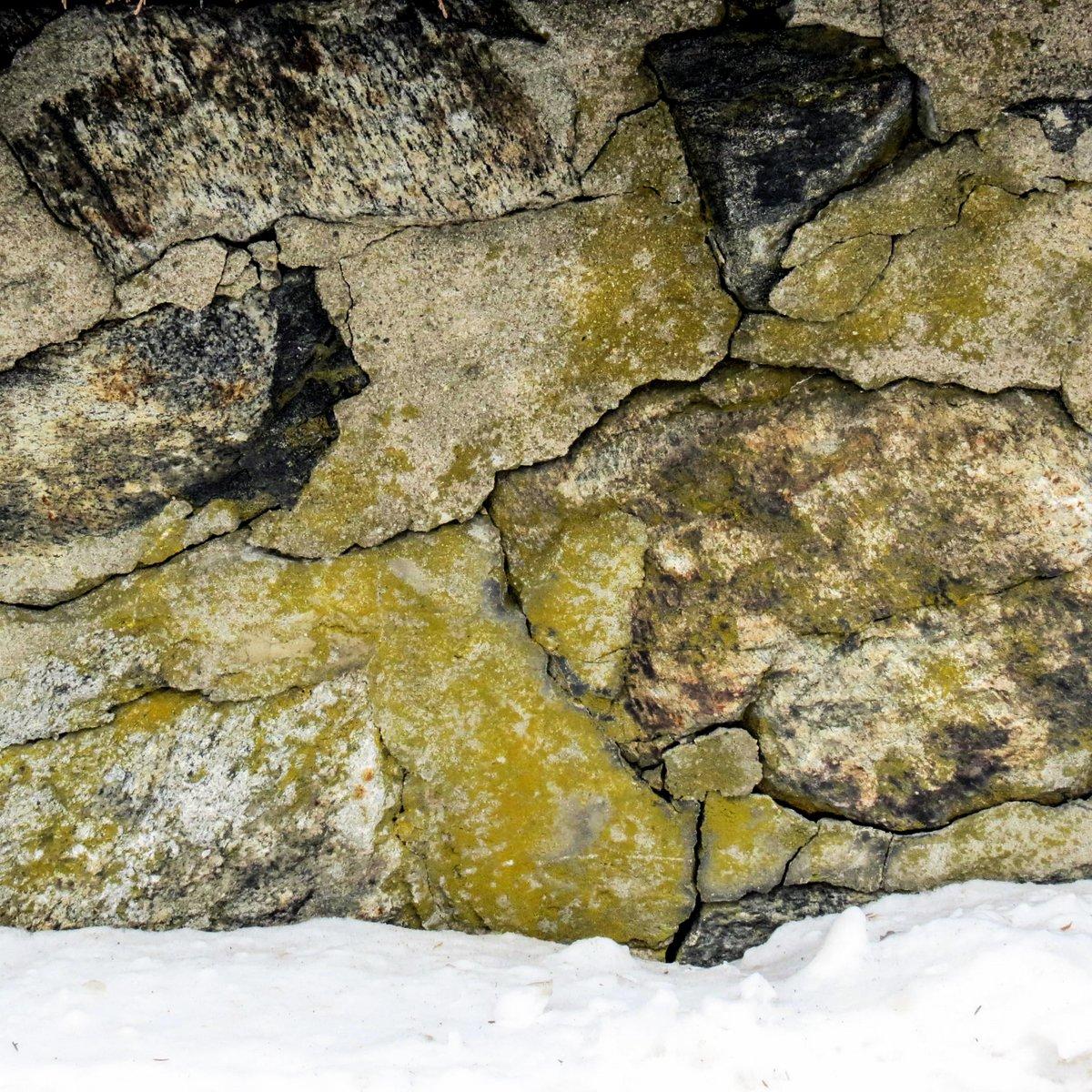 7. Sidewalk Firedot Lichen