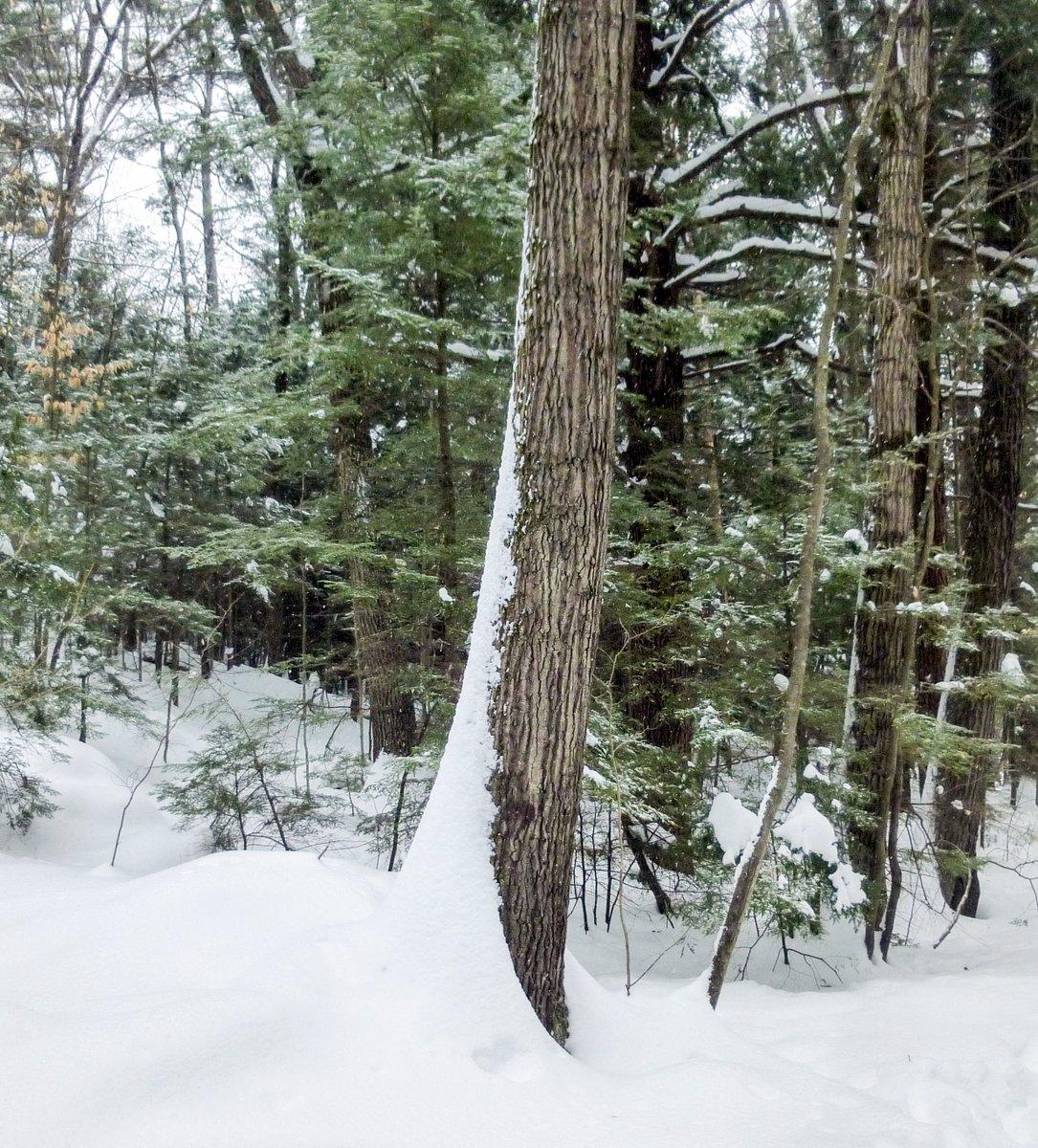 8. Wind Blown Snow