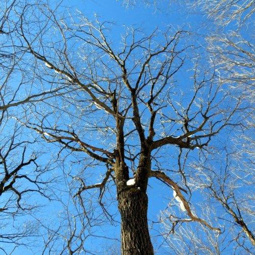 9. Tree Tops