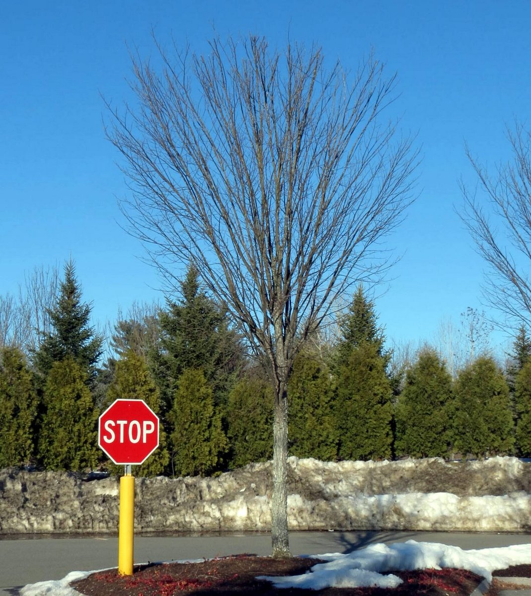 1. The Tree