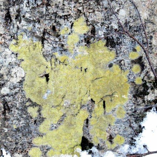11. Lichen on Stone