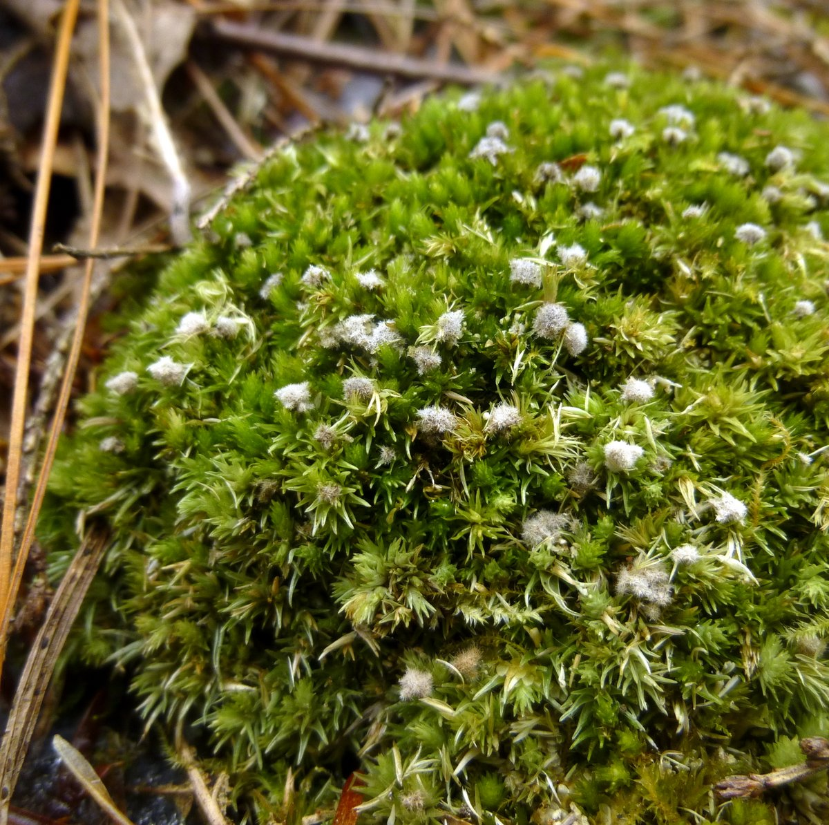 11. Moss With Unknown Growth