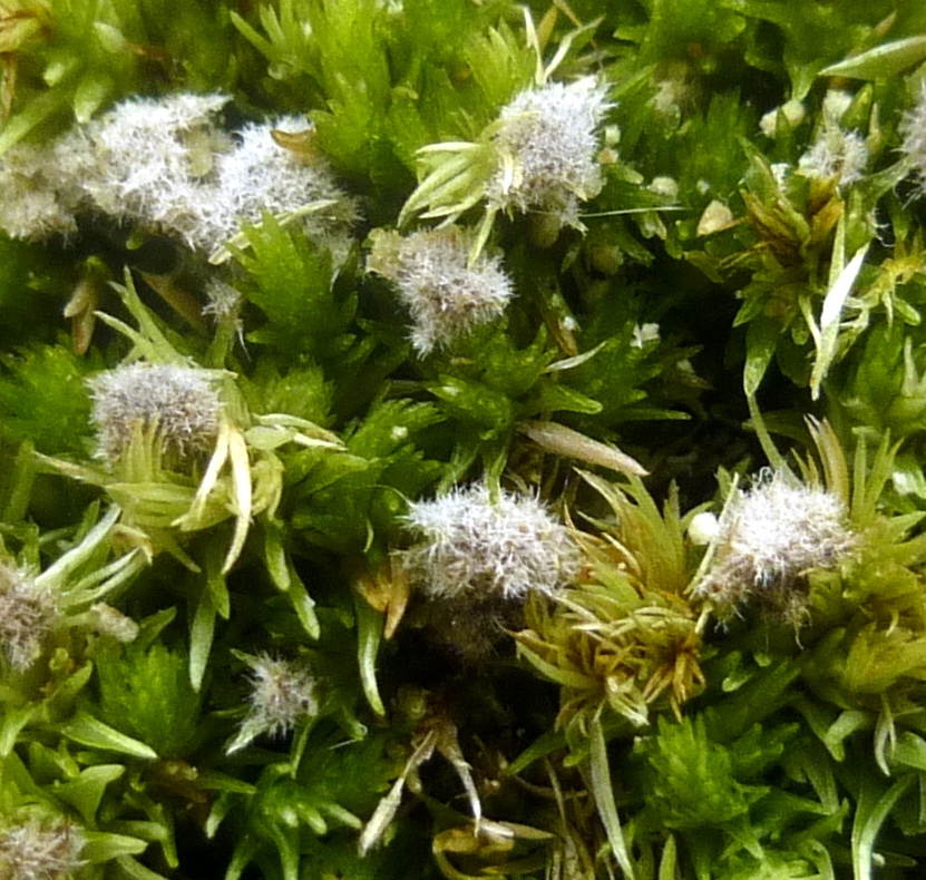 12. Moss With Unknown Growth