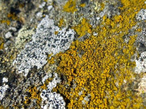 14. Lichens