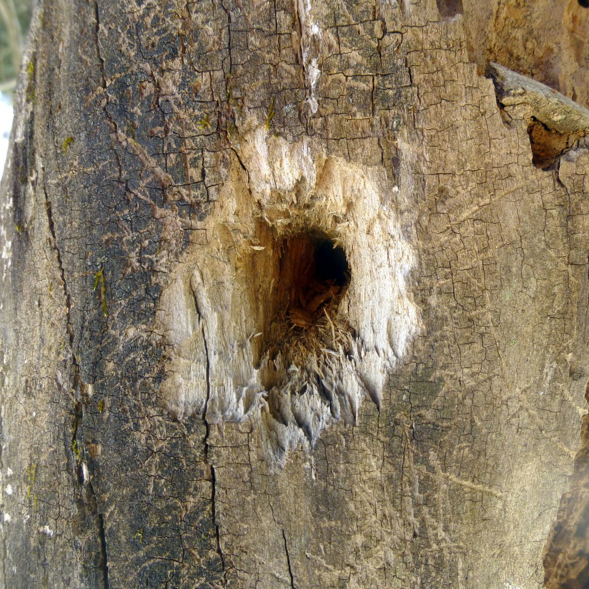 14. Woodpecker Hole