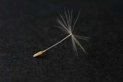 15. 800px-Dandelion_seed_-_May_2012