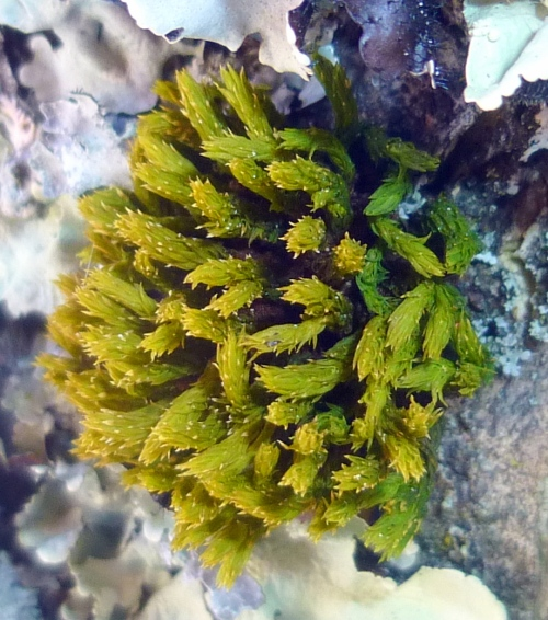 4. Moss