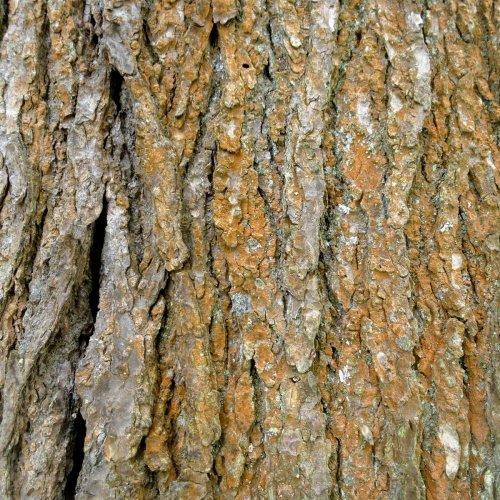 5. Hemlock Bark