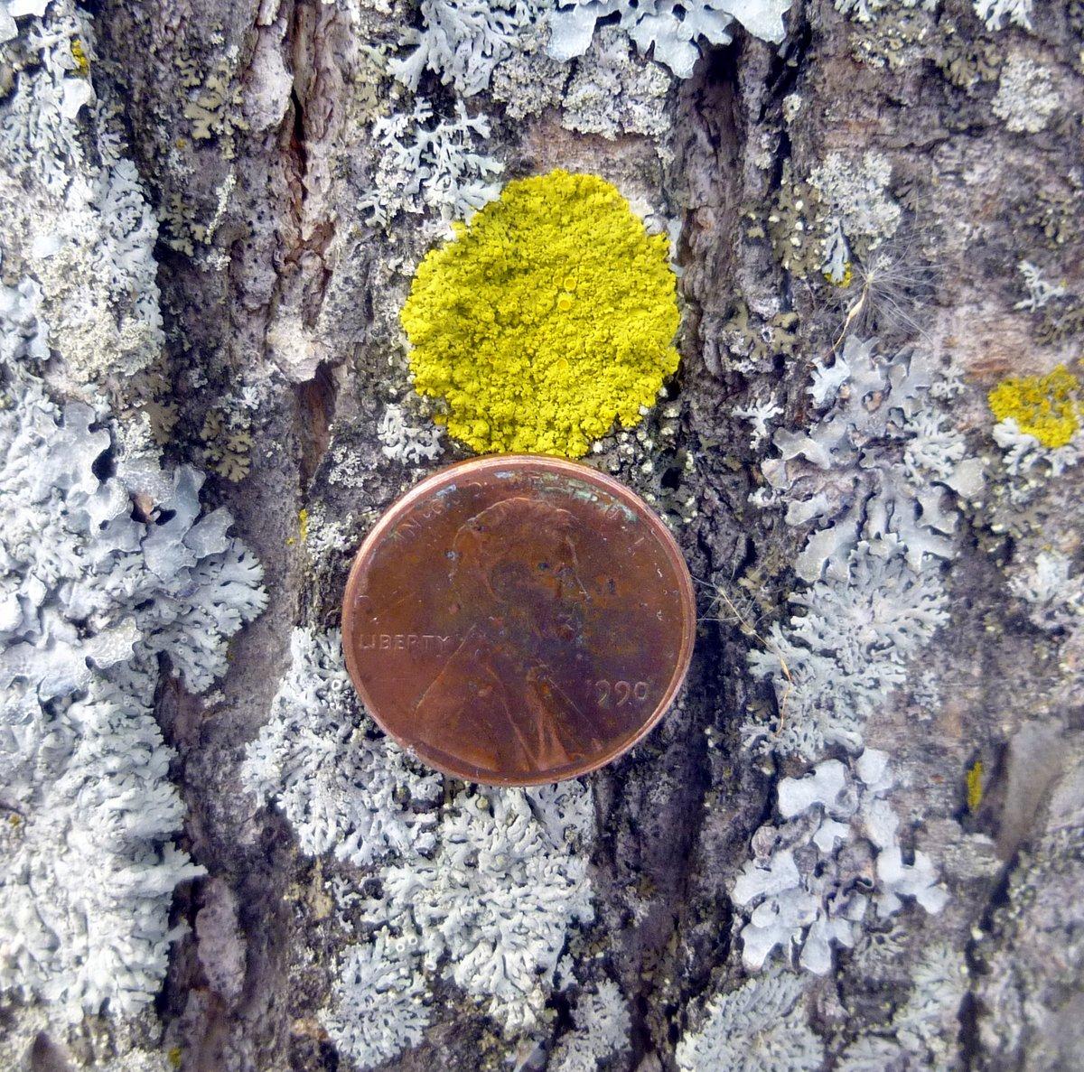 5. Penny on Tree