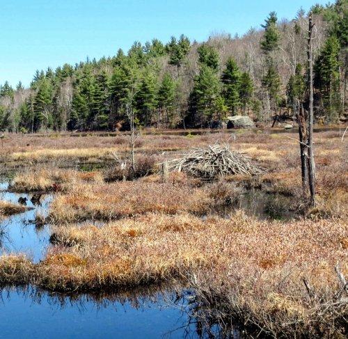 1. Rye Pond Beaver Lodge