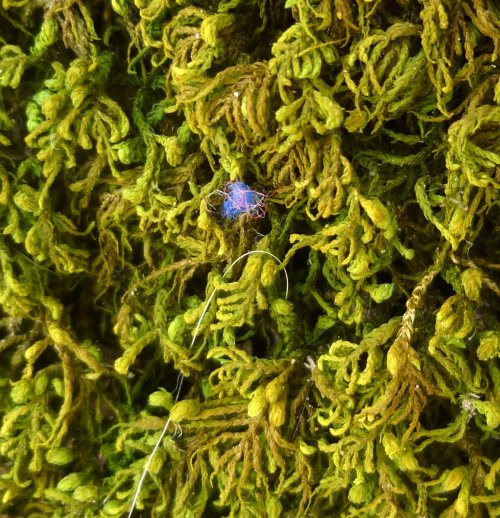 14. Blue Fibers on Tree Skirt Moss