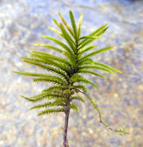 16. Tree Moss