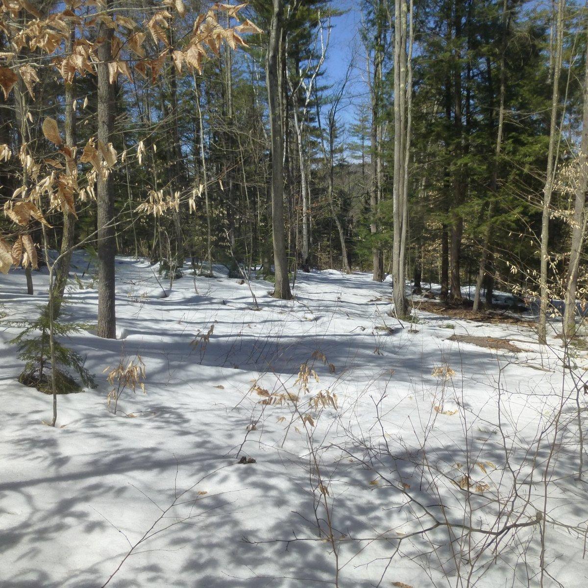 2. Snowy Woods