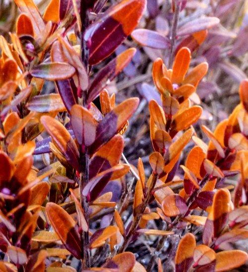 3. Cranberry Plants