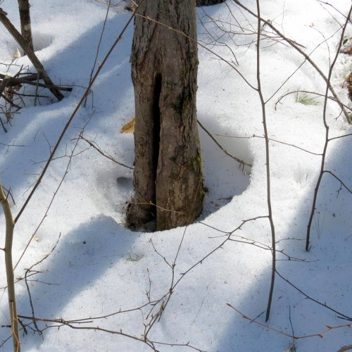 3. Snow Melt