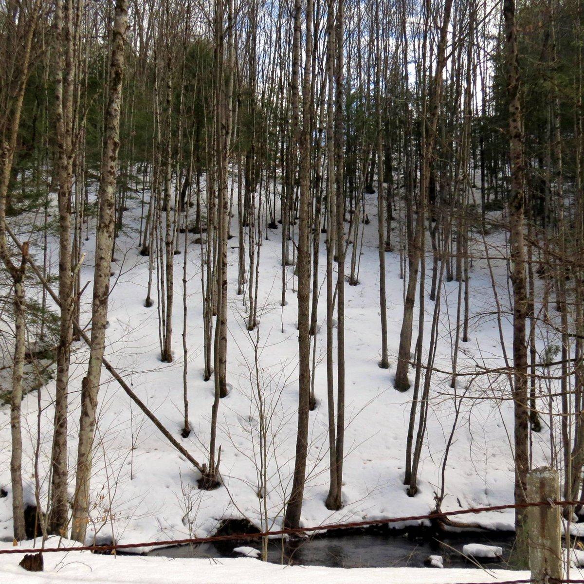 3. Snowy Hillside