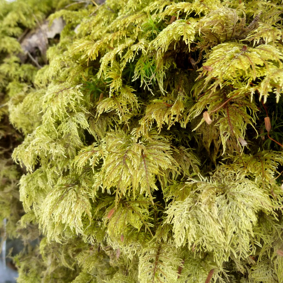 6. Stairstep Moss
