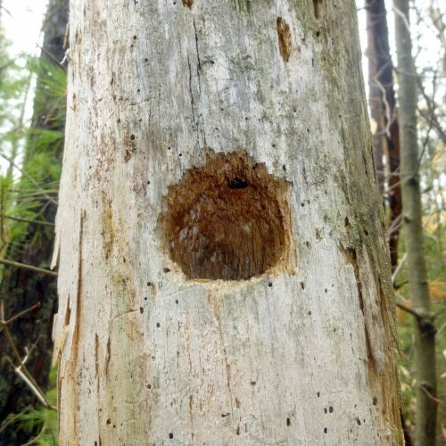 6. Woodpecker Hole