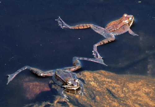 9. Frogs