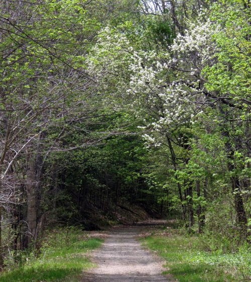 1. Cherry Trees