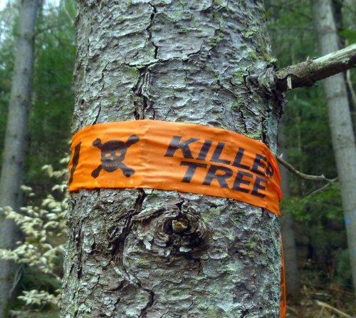 17. Killer Tree
