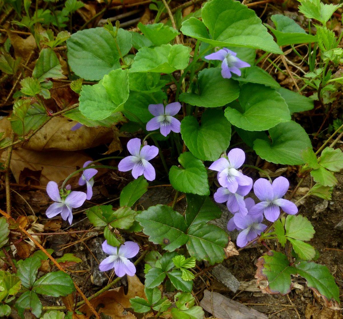 21. Violets