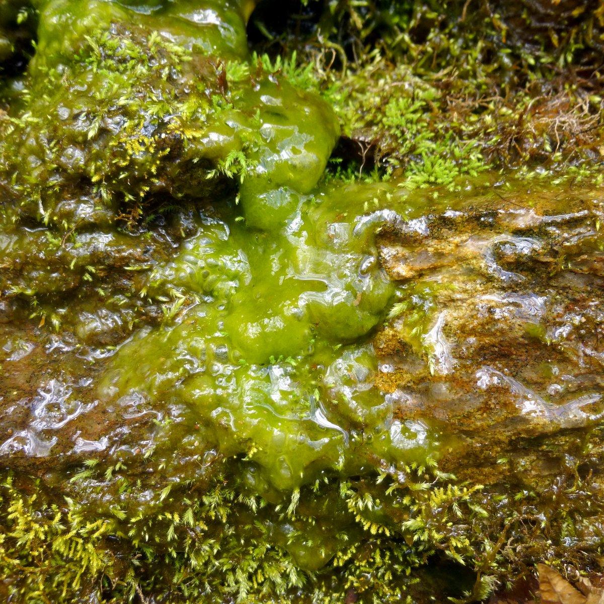 7. Algae