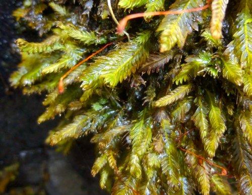 9. Pocket Moss