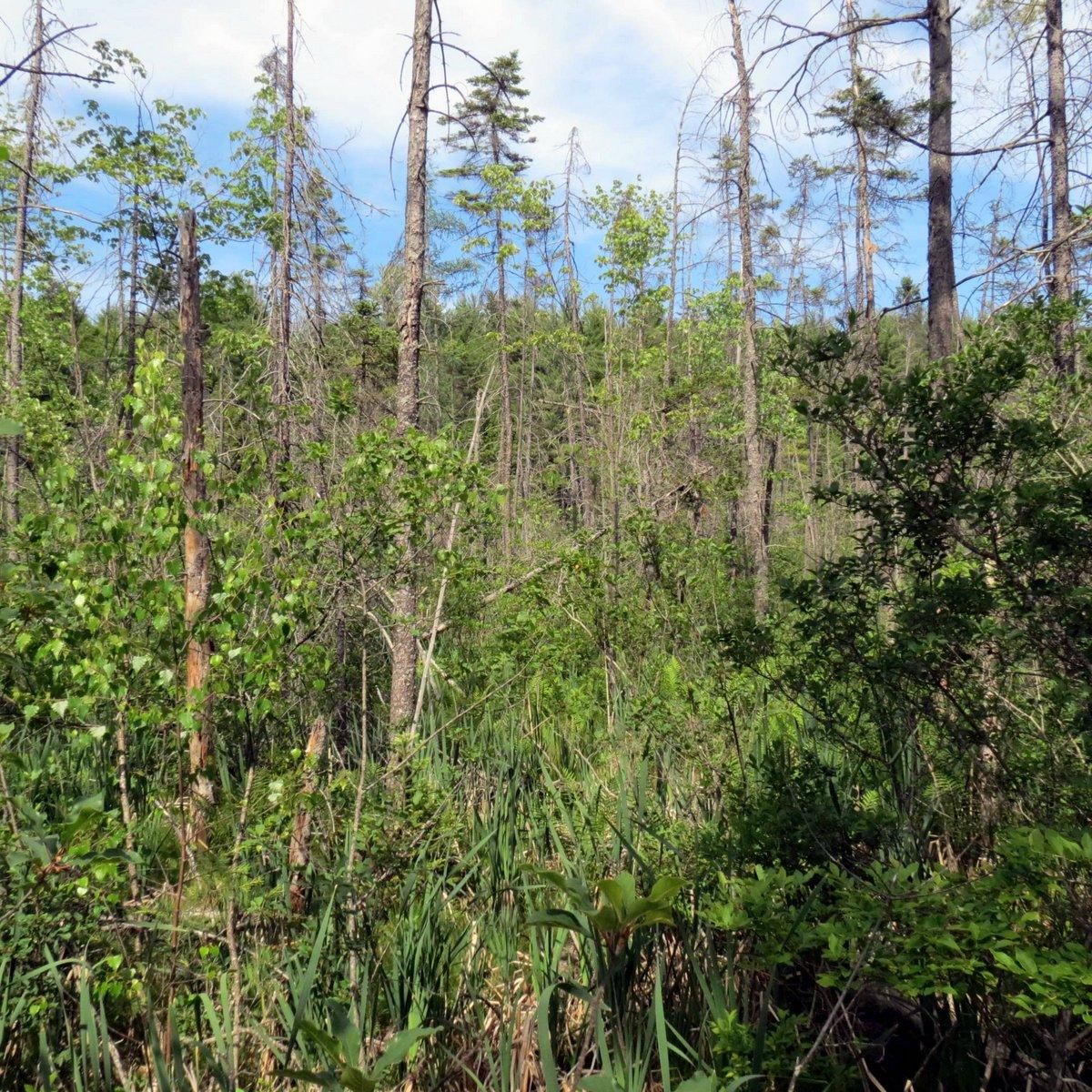 10. Swamp View