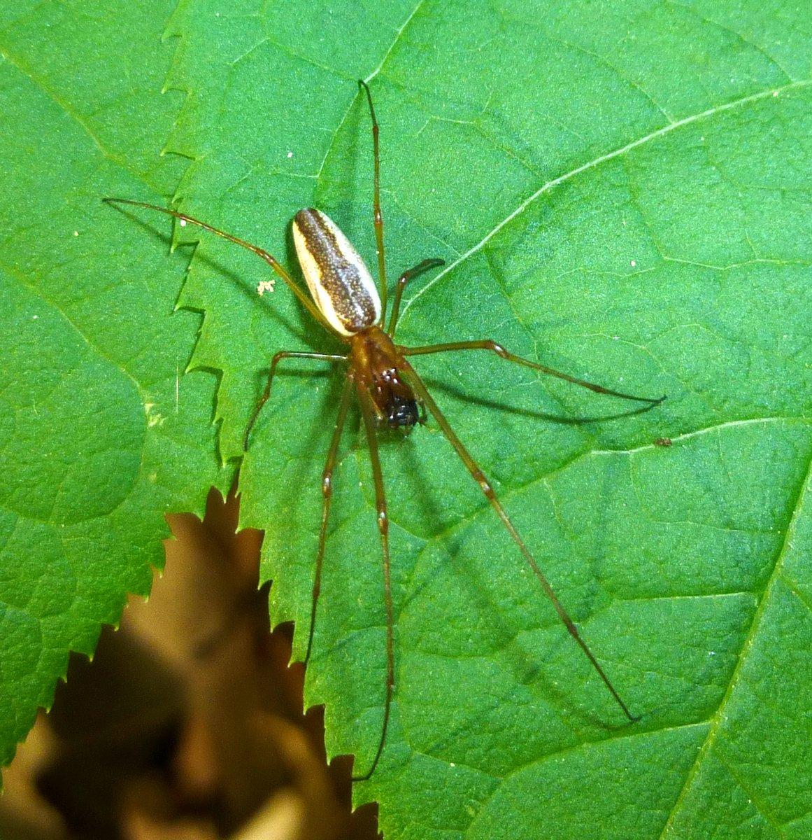 6. Spider