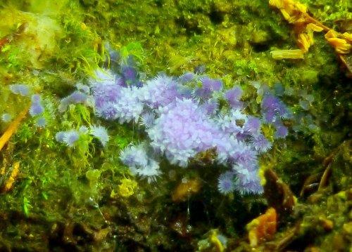 9. Blue Slime Mold
