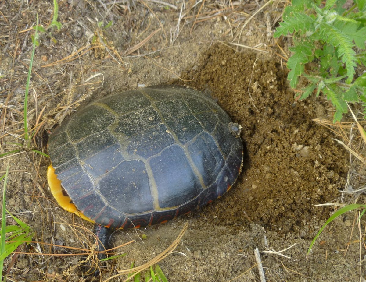 9. Turtle Laying