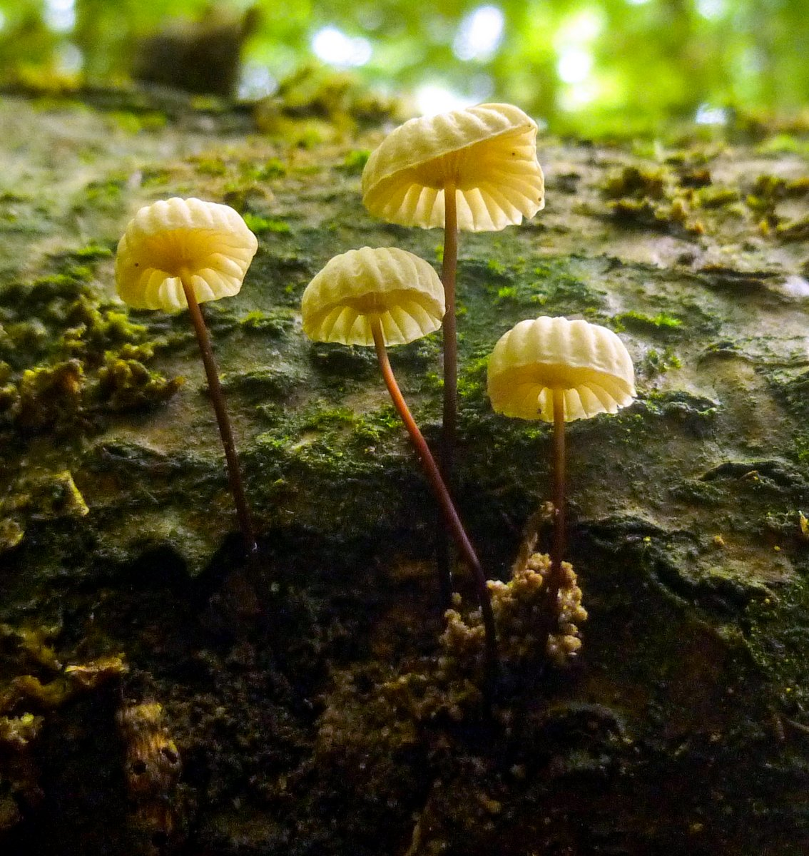 11. Pinwheel Mushrooms